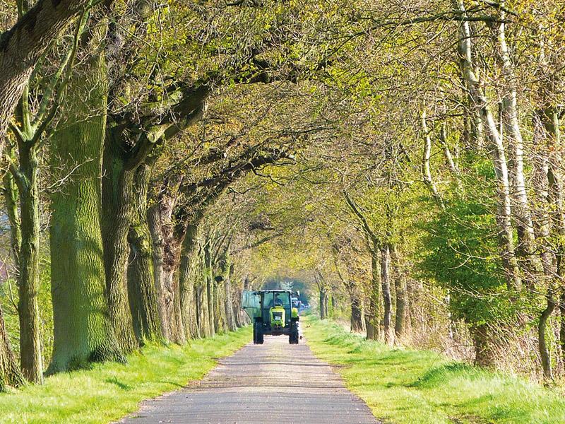 Auf dem Weg zum Osterwalder Wald