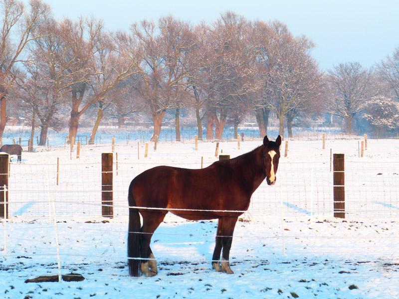Über 1.000 Pferde leben in Langenhagen