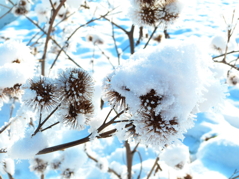 Winterliches Detail am Wegrand nahe der Wietze