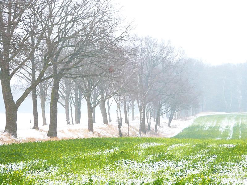WinterWettmar2