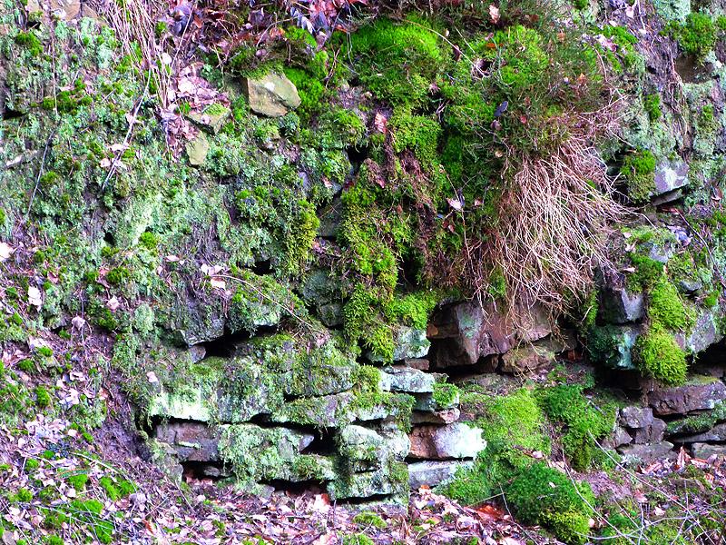 Bewachsene Halden der alten Steinbrüche