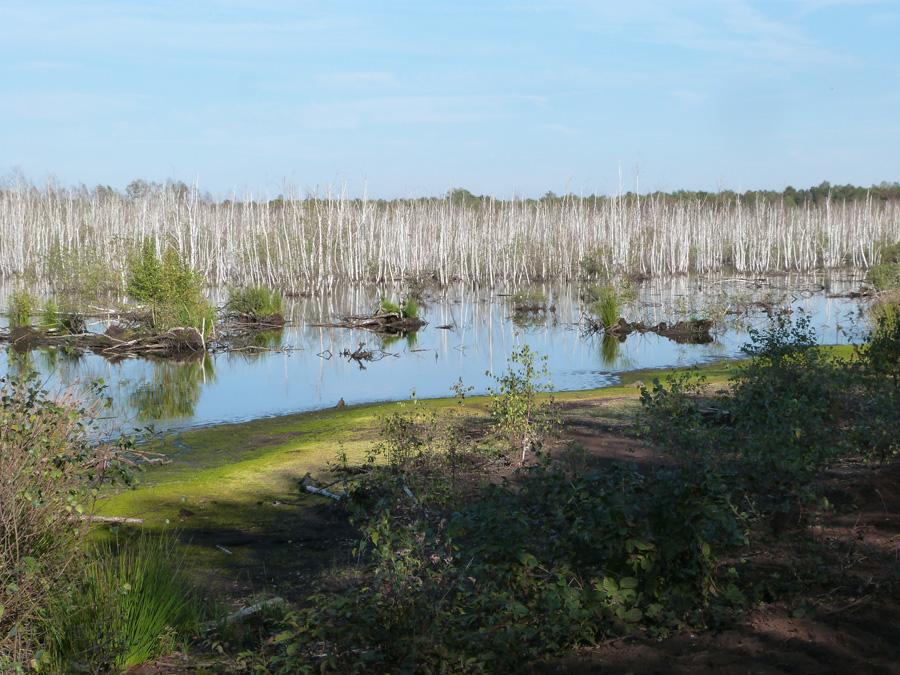 Geheimnisvolle Landschaft: das Tote Moor bei Neustadt