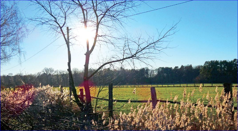 Feld in Burgwedel